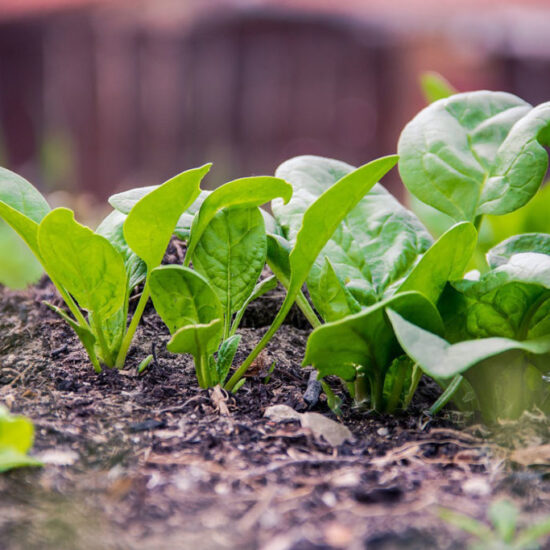 Reduce Waste & Grow Your Own Greens